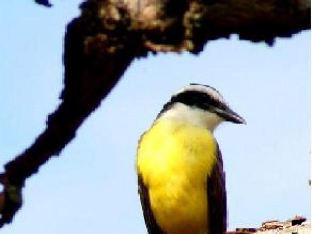 Foz do Iguaçu incentiva a prática do birdwatching