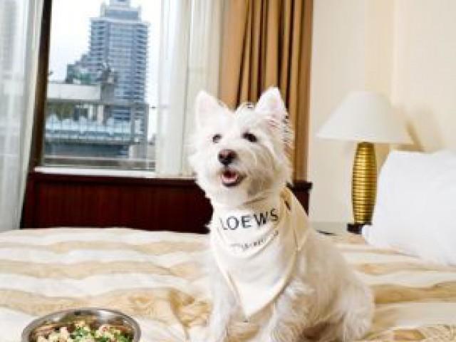 Hotéis Loews fazem parceria veterinária para oferecer tratamento aos pets hospedados