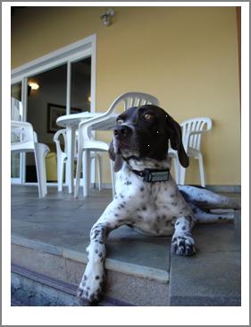 Coleira anti-latido é aposta para bom relacionamento entre os cães, donos e vizinhos
