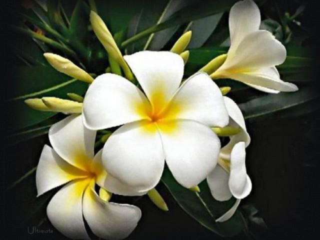 A estação das flores é  a hora certa para escolher as melhores espécies para o jardim