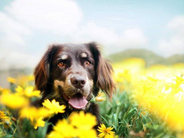 Animais de estimação requer cuidados especiais no calor