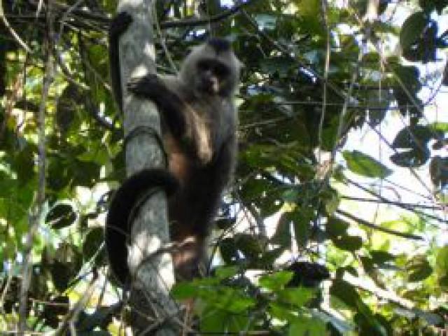 Expedição registrou informações sobre os primatas na Reserva Biológica do Gurupi